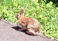 GSF-OOTD.6114.rabbit